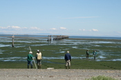 Port_townsend_sequim_3_crabs_port_6